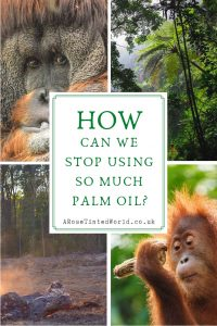 How Can We Stop Using So Much Palm Oil?