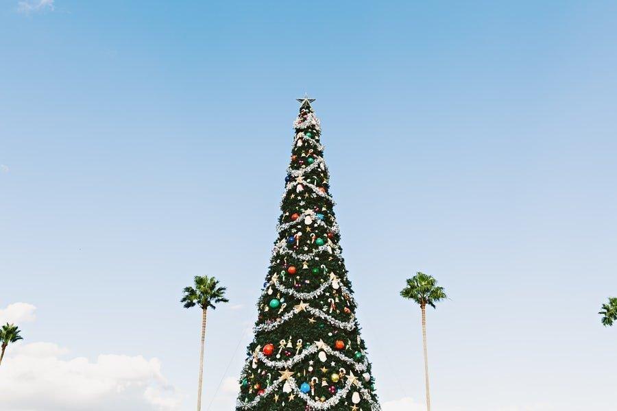 15th of December - tree