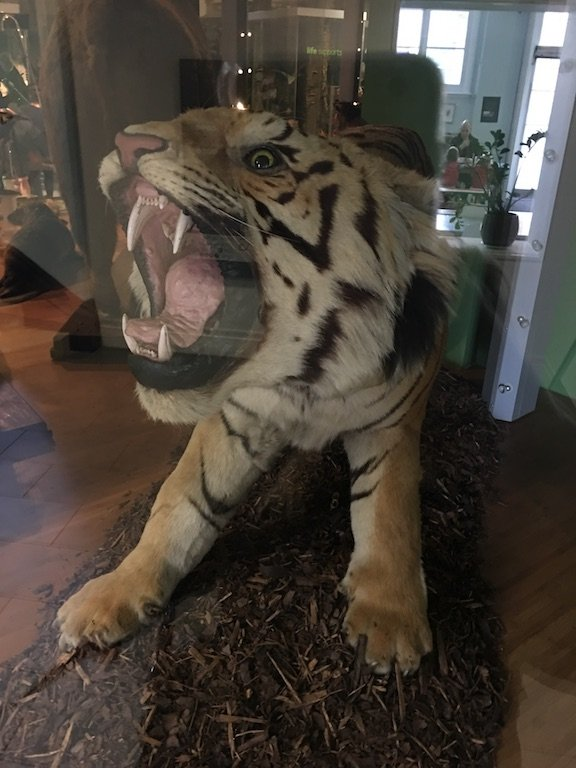 The Leeds Tiger
