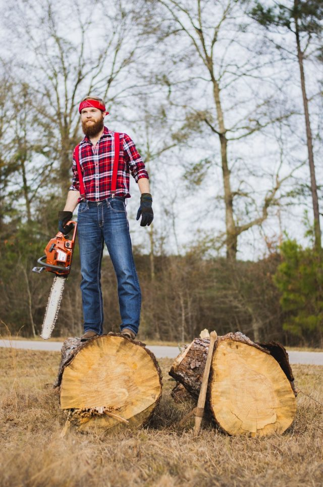 Projects You Should Hire a Tradesman to Do - tree surgery