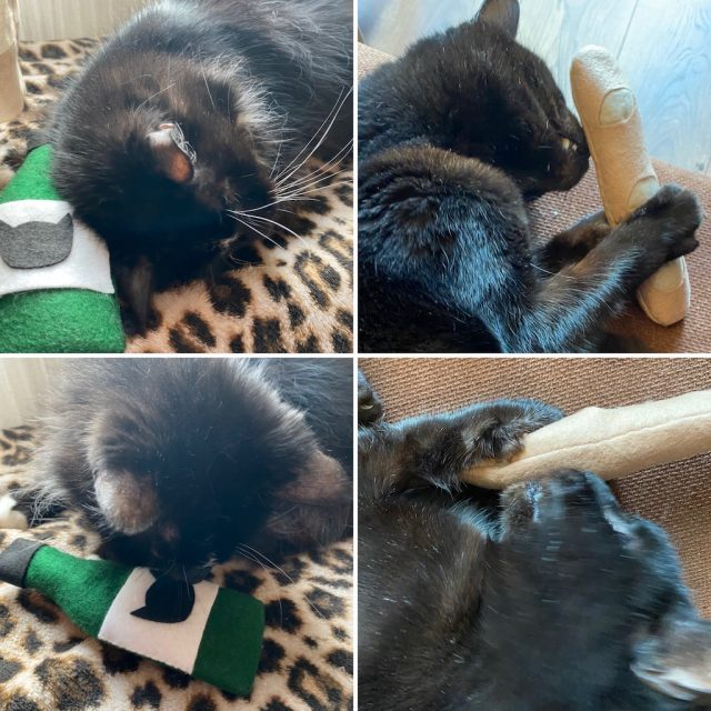Joy and Leo with Catnip toys