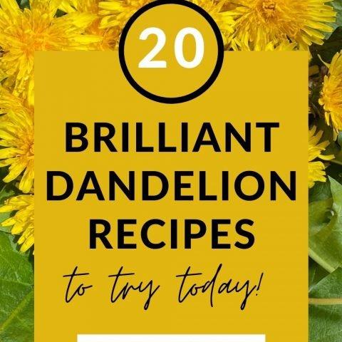Dandelion Recipes – 20 Ways To Use This Versatile Flower