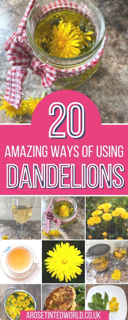 Dandelion Recipes. Did you know that dandelions are edible & have health benefits? You can eat every single part of the plant, from flowers & leaves to the dark wood of its root. They can be used to make dandelion tea, dandelion coffee, dandelion honey, salad, quiche, fritters & so much more. Plus the plant can be used in balms, salves & soaps. Find here 20 brilliant recipe ideas for ways of how to eat dandelions & use them in everyday life to sooth skin, be diuretic & for antioxident goodness.