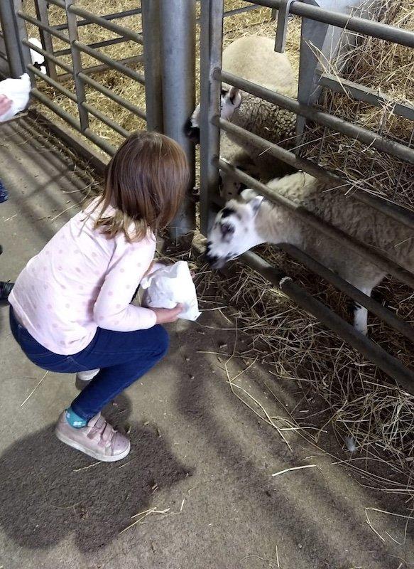 Elizabeth at Playdale Farm