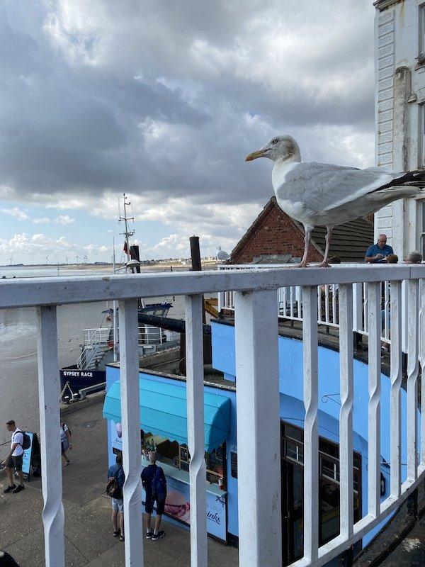 Bridlington Harbour and a seagull!